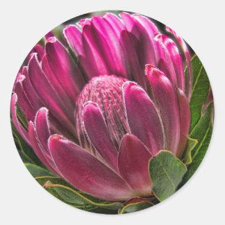 Helaineのプロテアの花 ラウンドシール