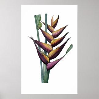 Heliconiaの優れた質のプリント ポスター