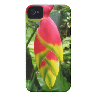 Heliconia Rostrata Case-Mate iPhone 4 ケース