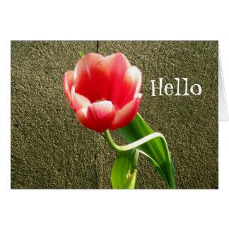 hellotulip、こんにちは カード