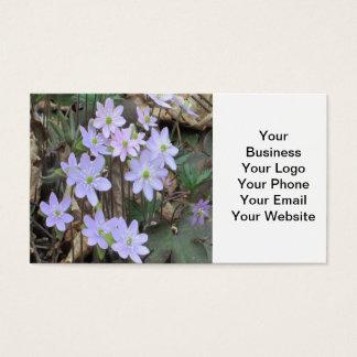 Hepaticaの野生の花の植物 名刺