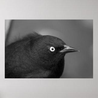 Hitchcockの恐い鳥 ポスター