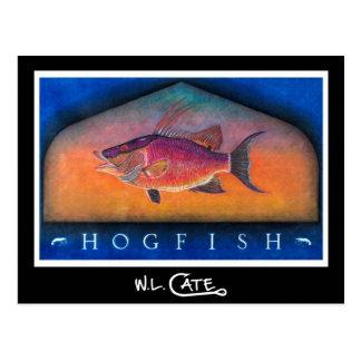 Hogfishの郵便はがき ポストカード