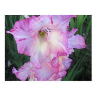 Hollyhockの紫色の顕花植物 ポストカード