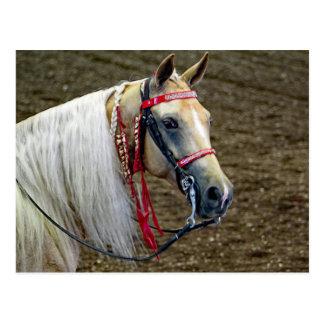 Horse 662 ポストカード