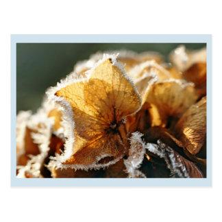 Hortensienblüten mit Reif ポストカード