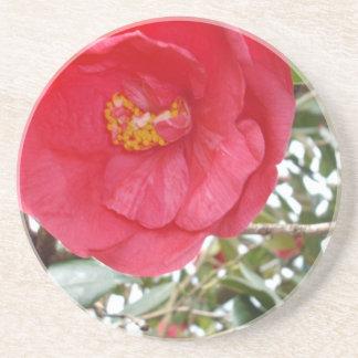 Hot_Pink_Camellia、_ コースター