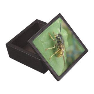 Hoverflyのマクロ優れたギフト用の箱 ギフトボックス