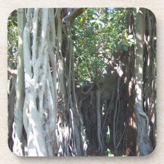 Howe Island主のイチジクの木のコースター コースター