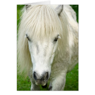 Howgillhoundsはシェトランド諸島子馬を梳きます カード