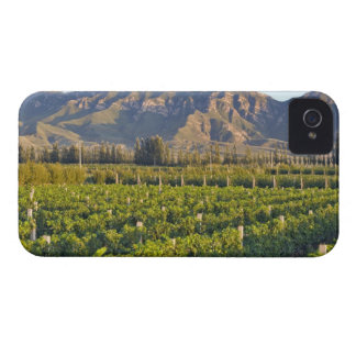 Huailai Rongchen 2のカベルネソーヴィニョンのつる植物 Case-Mate iPhone 4 ケース