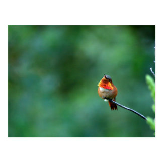 Hummingbird Postcard ポストカード
