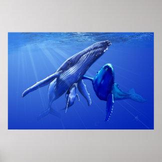 Humobackのクジラ ポスター