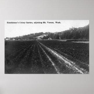 Hutchinsonのセロリの庭の眺め ポスター