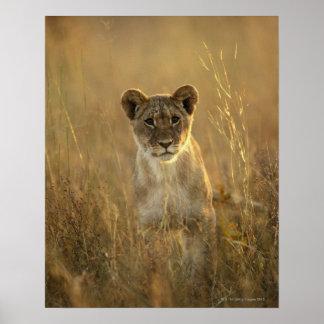 Hwangeの国立公園、ジンバブエ ポスター