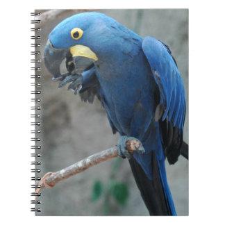 Hyacinthのコンゴウインコのノート ノートブック