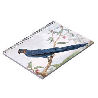 Hyacinthのコンゴウインコの鳥のスケッチ ノートブック