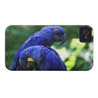 Hyacinthのコンゴウインコ Case-Mate iPhone 4 ケース