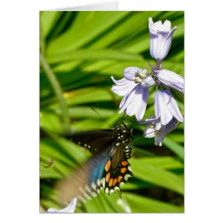 HyacinthsカードのSpicebushのアゲハチョウの蝶 カード