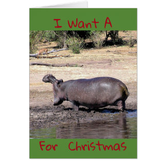 """""""I Want A (photo of hippo) For Christmas"""" humorous カード"""