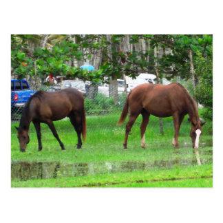 Icacos、南トリニダードで牧草を食べている馬 ポストカード