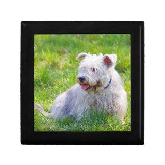Imaalテリア犬の宝石箱の装身具箱の谷間 ギフトボックス