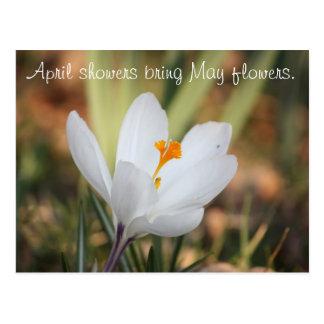 IMG_0371の4月のシャワーは5月の花を持って来ます ポストカード