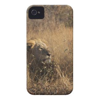 IMG_1679.jpg Case-Mate iPhone 4 ケース