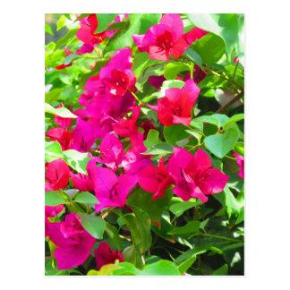 India travel flower bougainvillea floral emblem ポストカード