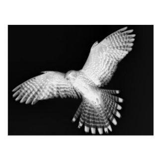 Interdimensionalの猛禽 ポストカード