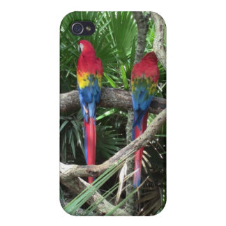 iPhone 4のための深紅のコンゴウインコの電話箱 iPhone 4 Cover