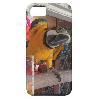 iPhone 5/5Sのための青及び金ゴールドのコンゴウインコの携帯電話カバー iPhone SE/5/5s ケース