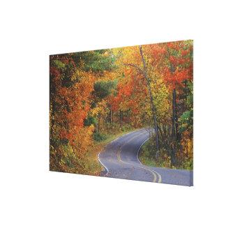 Itascaの州立公園の秋の樹木限界線道路 キャンバスプリント