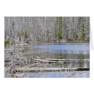 jack湖 カード