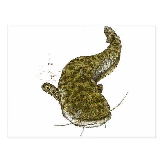 Japanese common catfish ポストカード