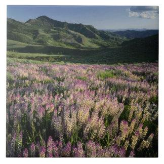 Jarbridgeの荒野および山、ネバダの拍車 タイル