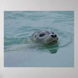 Jokulsarlon氷湖のアザラシの水泳 ポスター