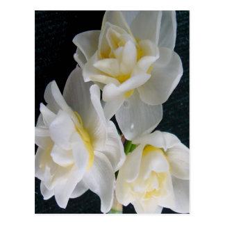 Jonquilの花- Ecclesiastesの3:1 ポストカード