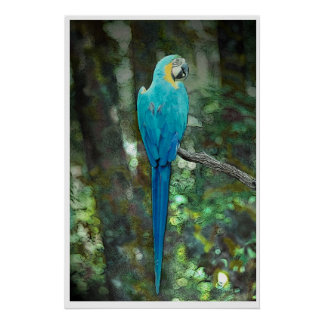 JungleWalk.comからの青および黄色コンゴウインコ ポスター