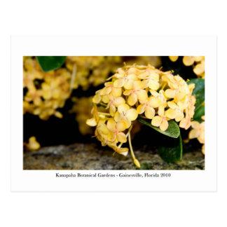 Kanapahaの庭- Gainesville 006 ポストカード