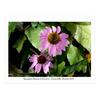 Kanapahaの庭- Gainesville 008 ポストカード