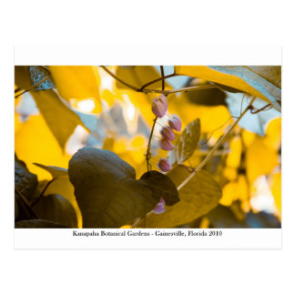 Kanapahaの庭- Gainesville 015 ポストカード
