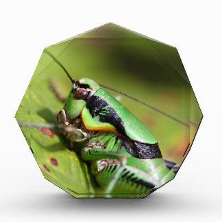 katydidのコオロギのEupholidopteraのchabrieri 表彰盾