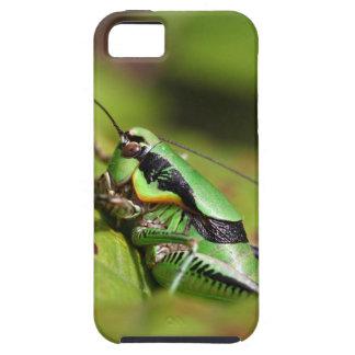 katydidのコオロギのEupholidopteraのchabrieri iPhone SE/5/5s ケース