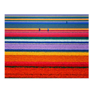 Keukenhofオランダショーの庭の花 ポストカード
