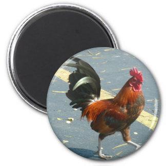 Key Westの鶏 マグネット
