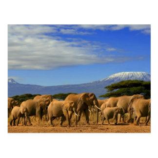 Kilimanjaroおよび象 ポストカード