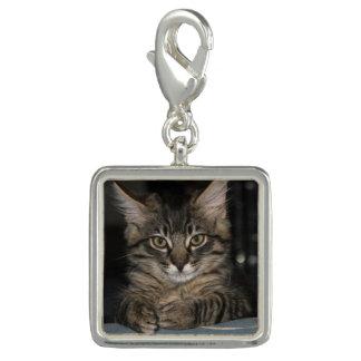 "Kimberの子猫""Oh実際に""チャーム チャーム"