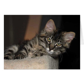 Kimber Chillinの子ネコのブランクの挨拶状 カード