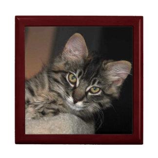 Kimber Chillinの子ネコの宝石箱 ギフトボックス